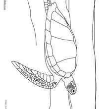 Schwimmende Grüne Schildkröte zum Ausmalen