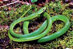 Wie man eine Schlange malt