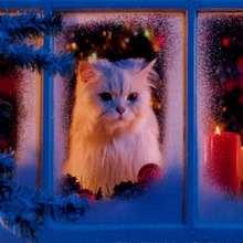 Süße Katze Poster