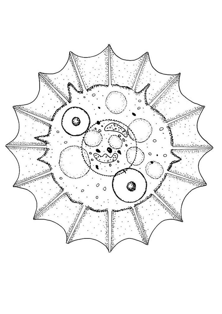 Ausmalbilder Mandala Schmetterling : Schmetterling Mandala Zum Ausmalen De Hellokids Com