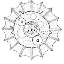 Muschel Mandala