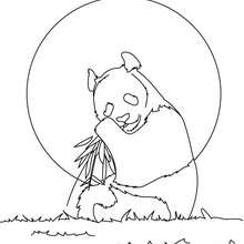 Riesiger Panda zum Ausmalen