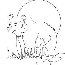 Grizzly zum Ausmalen