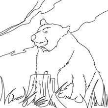 Kodiakbär zum Ausmalen