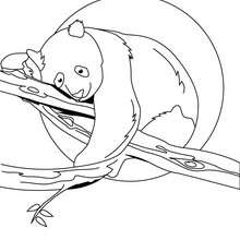 Panda auf dem Baum zum Ausmalen