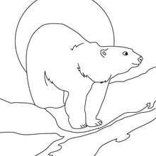Eisbär zum Ausdrucken