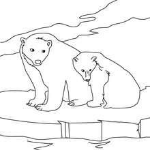 Eisbären zum Ausmalen