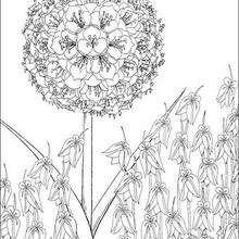Kirikus Blume zum Ausmalen