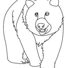 Großer Bär zum Ausmalen