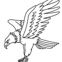 Adler Bild zum Ausmalen