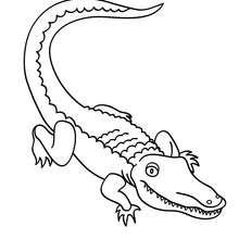 Krokodil zum Ausmalen