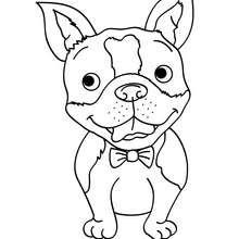 Lächelnder Hund zum Ausmalen
