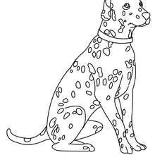 Dalmatiner zum Ausmalen