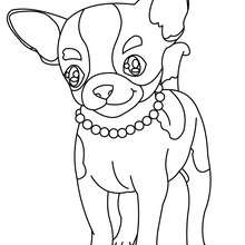 Chihuahua zum Ausmalen