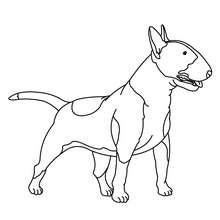 Bull Terrierzum Ausmalen