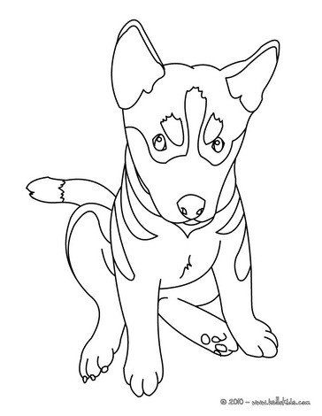 blue dog coloring pages - photo#8