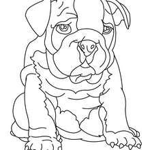 Bulldogge zum Ausmalen