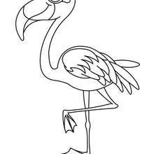 Flamingo zum Ausmalen