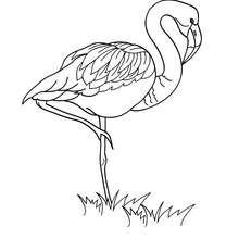 Flamingo Bild zum Ausmalen