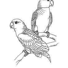 Papagei Bild zum Ausmalen