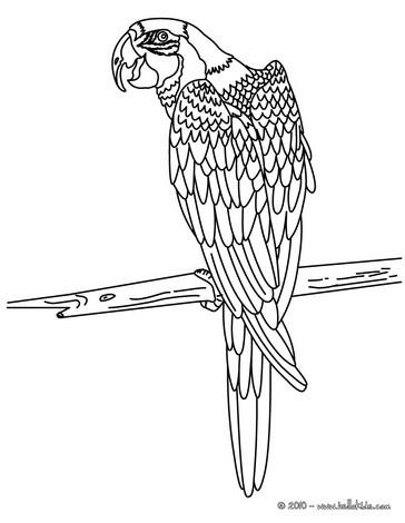 papagei zum online ausmalen zum ausmalen dehellokidscom