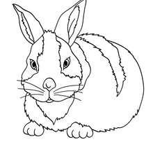 Großes Kaninchen zum Ausmalen