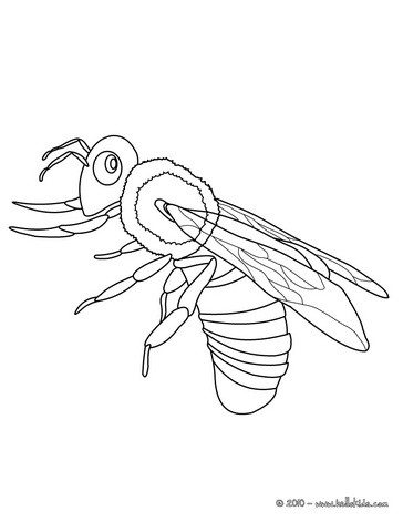 bilder zum ausmalen insekten / insekten kafer ausmalbilder