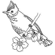 Vogel zum Ausmalen