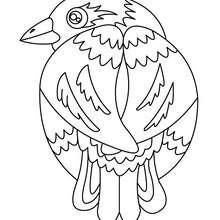 Vogel Malbogen