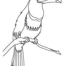Tukan zum online Ausmalen