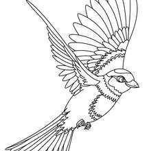 vogel silhouetten zum ausdrucken. vogel silhouetten zum