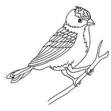 Vogel auf einem Ast zum Ausmalen