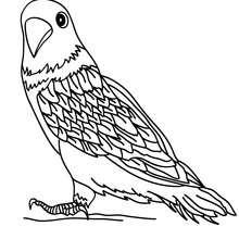 vogel : ausmalbilder, basteln, kostenlose spiele, bilder