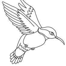 Kolibri zum Ausmalen