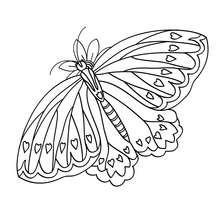 Schmetterling zum online Ausmalen