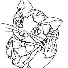 Kätzchen zum online Ausmalen