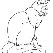 Katze zum online Ausmalen