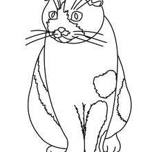 Katze Bild zum Ausmalen
