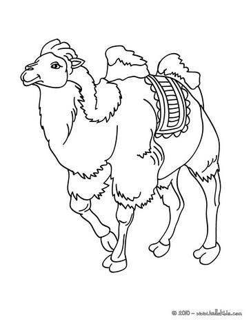 Kamel zum online ausmalen zum ausmalen  dehellokidscom
