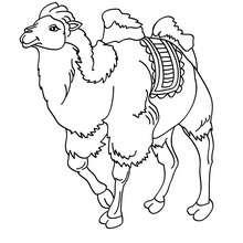 Kamel zum online Ausmalen