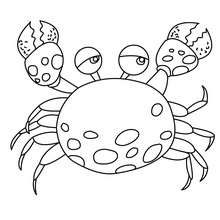Krabbe Bild zum Ausmalen
