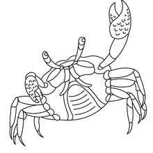 Krabbe zum online Ausmalen