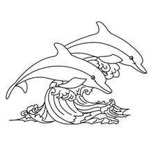 Delphine zum online Ausmalen