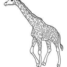 Giraffe zum online Ausmalen