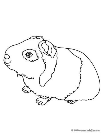 Kawaii Meerschweinchen Zum Ausmalen Zum Ausmalen De