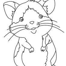 Hamster zum Ausmalen