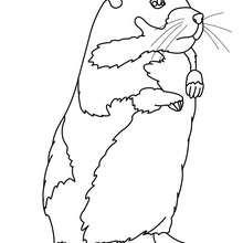 Hamster zum online Ausmalen