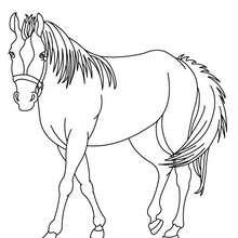 Pferd Bild zum Ausmalen