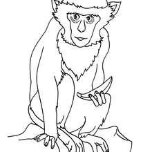 Affe zum online Ausmalen
