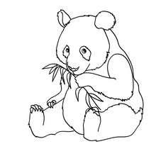Panda zum online Ausmalen